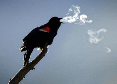 smoking_bird.jpg